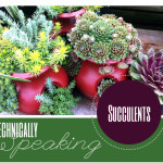 Technically Speaking: Succulents