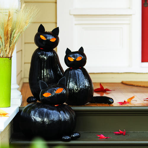 sunset blackcat-cats-pumpkin